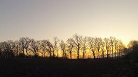 upływ Świt przez drzew w wiośnie zbiory