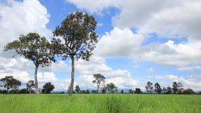 Upływ chmura z ryżowym polem zbiory wideo