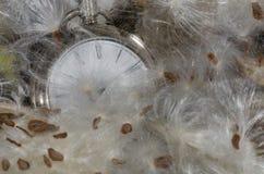 Upływ Czasu: Kieszeniowy zegarek Odpoczywa w Miękkim łóżku trojeści włókna obrazy stock