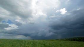 Upływu dramatyczny niebo i pszeniczny pole zbiory wideo