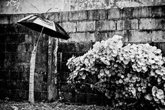 Up against the rain. Umbrella in the rain with plants and a brick wall Stock Images