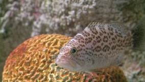 Up-close aquatic life (9 of 16). A view or scene of Nature stock footage