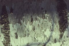 Up close bark on birch tree texture royalty free stock images