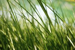 Up close grass Stock Photography