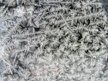 Up close Jack Frost royalty free stock photos