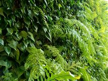 Up close living green wall relaxation. Close up to living green wall Stock Image