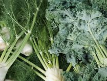 An up close look at Fennel and Kale. An up close look at nutritious Fennel and Kale stock image