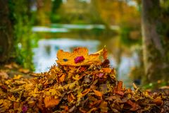 Up close macro autumn leaves royalty free stock photos
