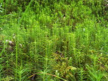 Up close plantlife. Plants. Close shot. Details Royalty Free Stock Image