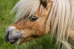 Up close pony portrait Stock Photo
