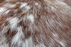 Up close shot of horse hair. An up close shot on brown and white horse hair stock photo