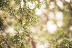 Up Close to a Juniper Tree | Badlands National Park, South Dakota, USA Stock Photos