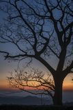 Closeup of tree against a mountain sunrise Royalty Free Stock Images