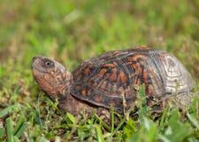 Up close turtle stock photos
