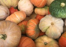 A collection of seasonal Pumpkins, Gourds and Squash Background Royalty Free Stock Photography