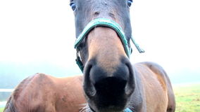 Up close view of the mouth of a horse while chewing stock footage