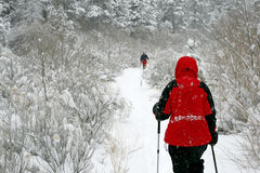 Up the path. Snowshoeing up the trail amidst the falling snow Stock Photos
