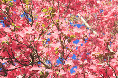 Up a Pink Tree Royalty Free Stock Images