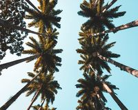 Up shot of beautiful tropical palms in a coastal city royalty free stock photos