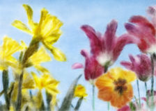 Up With Spring. Cheerful watercolor painting with low angle of Daffodils and Tulips against blue sky Royalty Free Stock Image