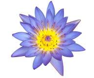 up täta lotusblommar för bakgrund white Arkivfoto