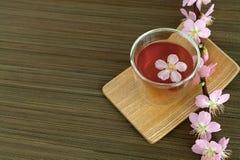 Сup of tea with blossom branch. Сup of tea with blossom pink flowers cherry branch. Selective focus Royalty Free Stock Photo