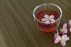 Сup of tea with blossom branch. Сup of tea with blossom pink flowers cherry branch. Selective focus Stock Photos