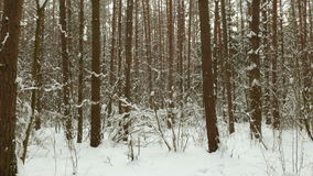 Up to the trees. Clean and frosty daytime. Used professional gimbal stabilazer stock footage