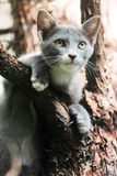 Up a tree. A cat stuck up in a tree royalty free stock images