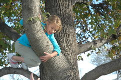 Up a Tree. A little girl climbing a tree in the fall when the leaves change color. Happy child looking down from a tree branch Royalty Free Stock Images