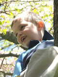 Up a Tree 2. Young boy high in a tree, smiling happily royalty free stock photography