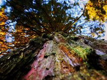 Up a Tree. A beautiful photo capturing the perspective of looking up directly at the base of the tree Stock Photos