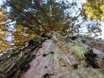 Up a Tree. A beautiful photo capturing the perspective of looking up directly at the base of the tree Stock Images
