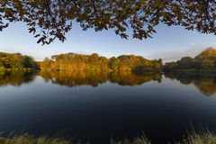 Autumn lake surrounded by autumnal trees stock images