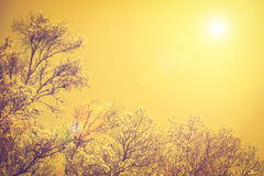 Up view of branch of tree and sun light on sunset sky, Vintage w Stock Photo
