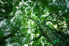 Up view green Trunk and tree branches abstract nature background Stock Photos