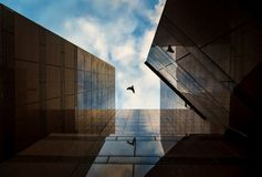 Up view on modern business building and bird flying on background. City urban architecture tower. Window reflections looking and blue sky stock photos