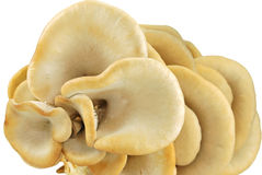 Up view of oyster mushrooms Stock Photo