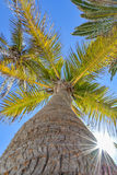 Up view of a palm tree on a beautiful day royalty free stock photos