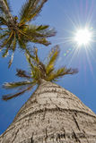 Up view of a palm tree on a beautiful day. On a beach, Spain Royalty Free Stock Photography