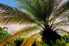 Up view through palm tree leaves stock image