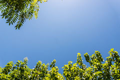 Up view on tree and clouds on blue sky Royalty Free Stock Photography