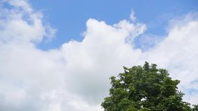 Up view on tree and clouds on blue sky stock video footage
