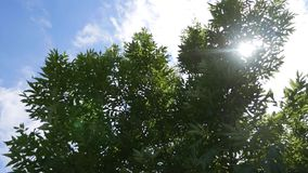 Up view on tree and clouds on blue sky stock footage