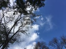 Blue sky, trees. Up view on trees and cloudy blue sky Stock Image