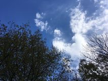 Blue sky and trees. Up view on trees and cloudy blue sky Stock Photo