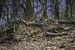 upadły drzewa Fotografia Royalty Free