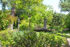 upadły drzewa Obraz Royalty Free