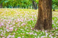 upadły kwiaty Obrazy Royalty Free