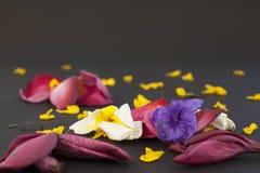 upadły kwiaty Fotografia Stock
